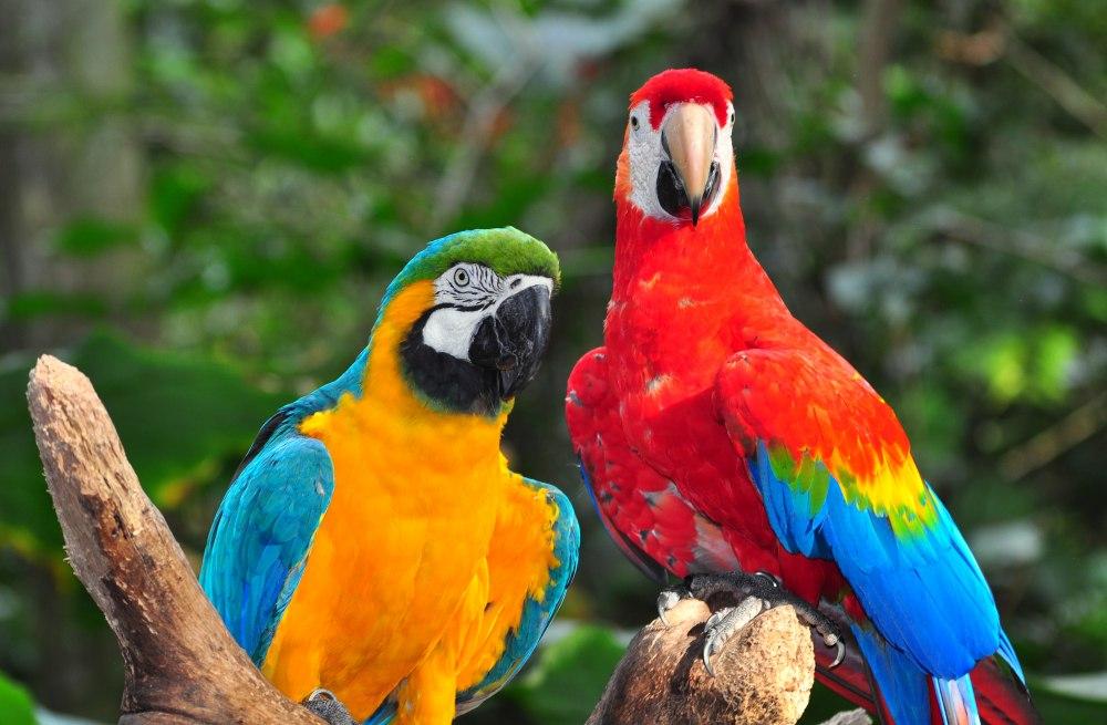 """Екскурзия Аржентина и Бразилия от 21.01.19 - Пътуване в ритъма  на Южна Америка - Южна Америка е нещо повече от горещо време, пъстри  цветове, хладни коктейли, и излежаване на плажовете.  Южна Америка е едно истинско предизвикателство - за  пътешественици, за писатели, за всички онези, които  търсят бягство в друг, различен, идиличен свят. Южна  Америка е една истинска феерия на възприятията,  коктейл от емоции: от безмерната магия и  великолепието на водопадите Игуасу до величието на  непристъпните Анди, от пъстротата на индианските  пазари до пламъка на чувственото танго и ритмите на  самбата, от приказните безкрайни плажове до  тайнствата и мистиката на предколумбова Америка, от  култовите паметници на инките до насладата от  екзотичната кухня... """"Пътешествието на живота"""" -  това е Южна Америка! Само след няколко часа полет ще  се потопите в безкрайната мозайка от пейзажи, в този  различен свят, сякаш толкова по-топъл… по-шарен… по- шумен… по-весел… по-непринуден… по-жив... от нашия."""