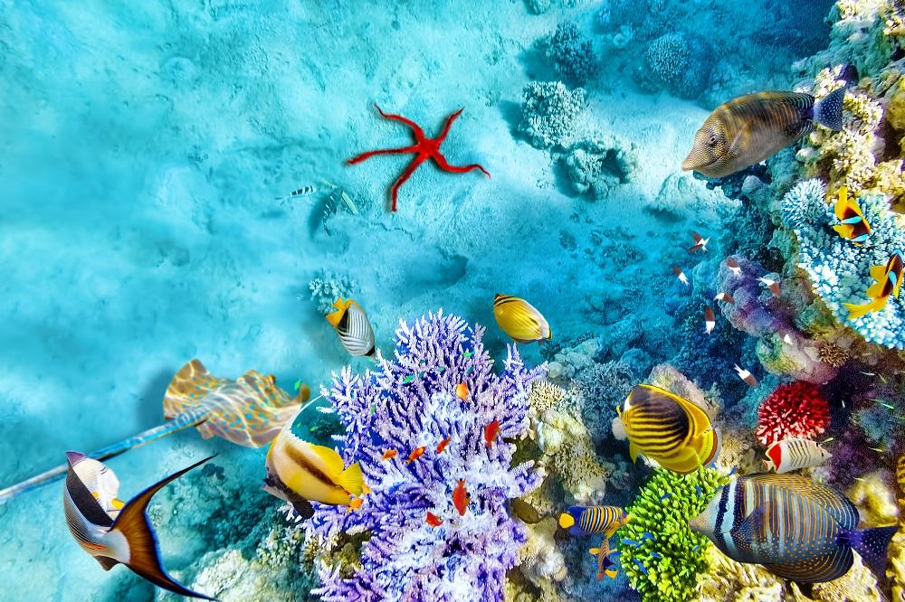 Почивка Почивка на Малдивите 2019 - Малдивите са нарицателно за лукс, романтика, топлота,  нежност, релакс и природни красоти, невероятно е колко  много, представата, създадена от туристическата  реклама, напълно отговаря на това, което намирате тук.  Същото усещане за безвремие, същите цветове и гледки,  същата безтегловност на тялото и духа, океана, пясъка,  всичко е такова, каквото го видяхте в туристическата  брошура.....