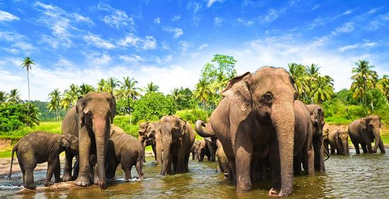 Шри Ланка - екзотичният остров на подправките